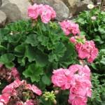 3/17/2012 March Arboretum (158)