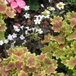 3/17/2012 March Arboretum (159)