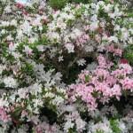 3/17/2012 March Arboretum (167)