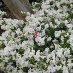 3/17/2012 March Arboretum (170)