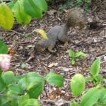 3/17/2012 March Arboretum (173)