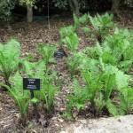 3/17/2012 March Arboretum (179)