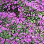 3/17/2012 March Arboretum (181)