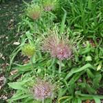 3/17/2012 March Arboretum (182)