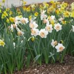 3/17/2012 March Arboretum (20)
