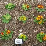 3/17/2012 March Arboretum (21)