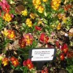 3/17/2012 March Arboretum (26)