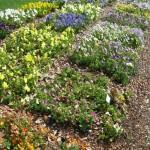 3/17/2012 March Arboretum (27)