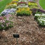 3/17/2012 March Arboretum (28)