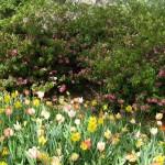 3/17/2012 March Arboretum (29)