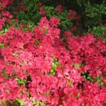 3/17/2012 March Arboretum (31)
