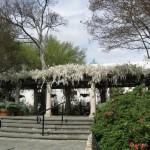 3/17/2012 March Arboretum (33)