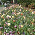 3/17/2012 March Arboretum (34)
