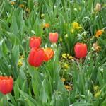 3/17/2012 March Arboretum (39)