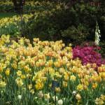 3/17/2012 March Arboretum (41)