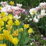 3/17/2012 March Arboretum (47)