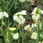 3/17/2012 March Arboretum (60)