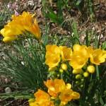 3/17/2012 March Arboretum (64)