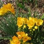 3/17/2012 March Arboretum (65)