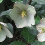 3/17/2012 March Arboretum (70)