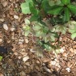 3/17/2012 March Arboretum (71)