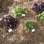 3/17/2012 March Arboretum (72)