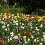 3/17/2012 March Arboretum (79)