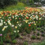3/17/2012 March Arboretum (80)