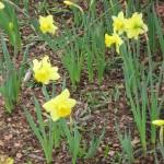 3/17/2012 March Arboretum (83)
