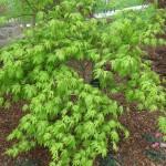 3/17/2012 March Arboretum (84)