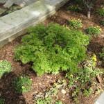 3/17/2012 March Arboretum (89)