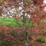 3/17/2012 March Arboretum (98)