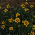 4/29/12 April Blooms (1)