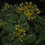 4/29/12 April Blooms (3)