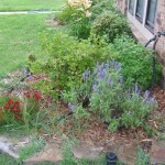 5/25/2012 End of May Flowers (7)