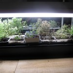8/14/2012 Cuttings and Seedings (1)