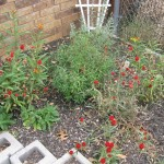 11/30/2012 November Garden Scenes (6)