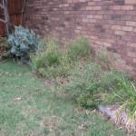 11/30/2012 November Garden Scenes (15)