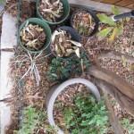 11/30/2012 November Garden Scenes (17)