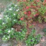 11/30/2012 November Garden Scenes (35)