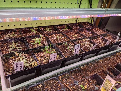 Seedling flat