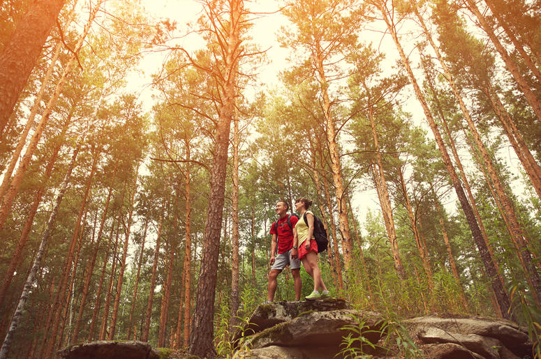 Hikers in the forest