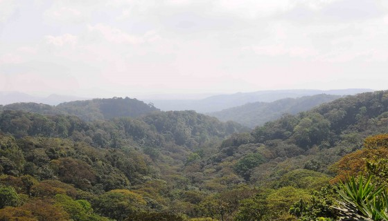 Cuenca Sur, reforestar