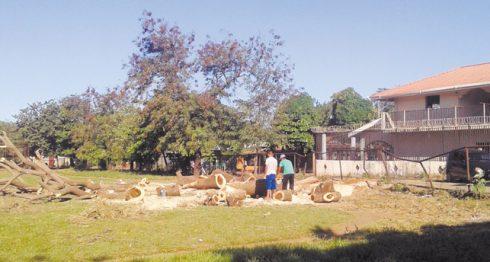 El árbol de guanacaste en la Colonia Teodoro S. Kint, en El Viejo, ponía en riesgo a una casa vecina. LA PRENSA/S.MARTÍNEZ