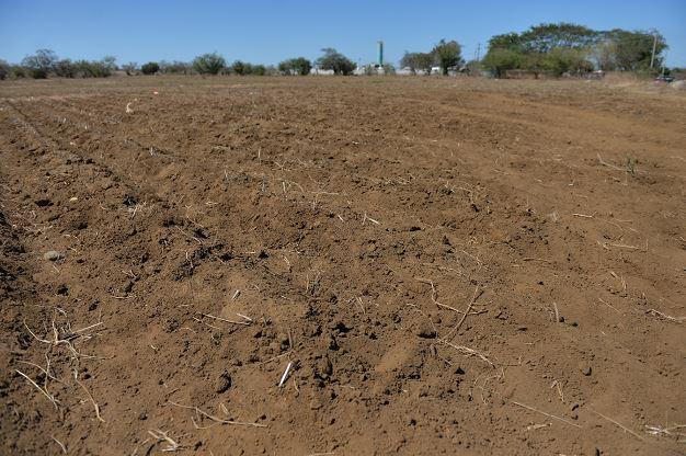 El 33.83 por ciento de los suelos en el país son de vocación forestal y sistema agroforestal. LAPRENSA/ARCHIVO