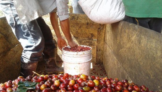 café, contrabando de café, Nicaragua