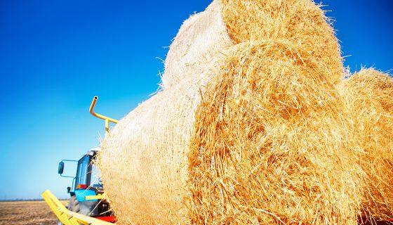 Una de las tareas que permite la maquinaria es almacenar alimento para el ganado, para la época seca. LA PRENSA /ISTHOCK PHOTOS