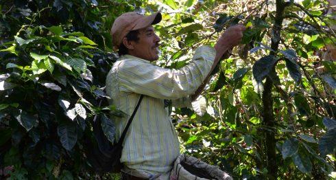 cortadores de café, cafetaleros, nicaragua, café