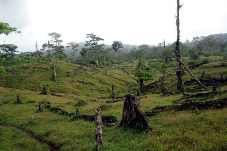 Inafor, forestal, reforma, Ley 462