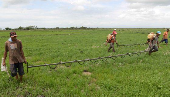 Agricultura, ambiente